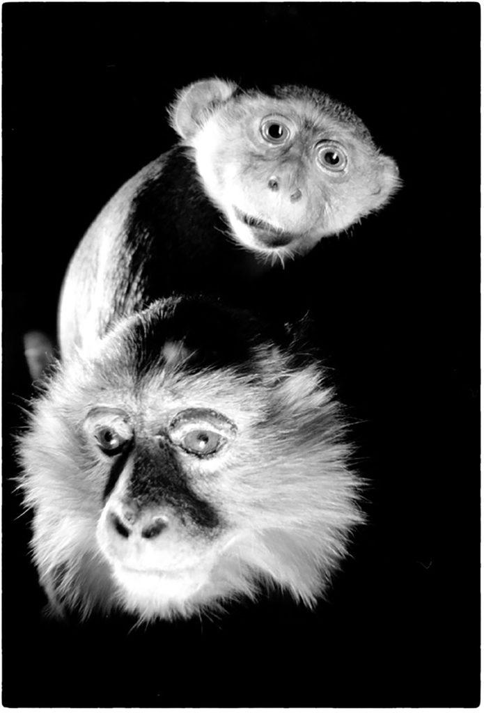 Zoo-Logiques